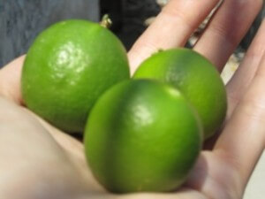 Whole Limes for White Sangria